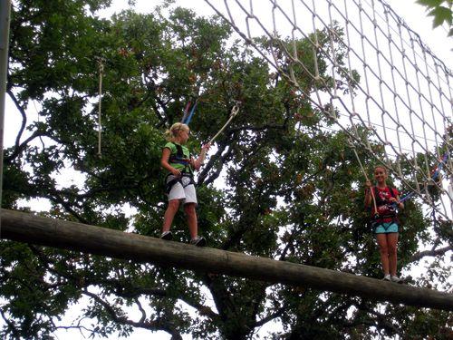 Treetops 5