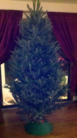 Christmas tree before pic