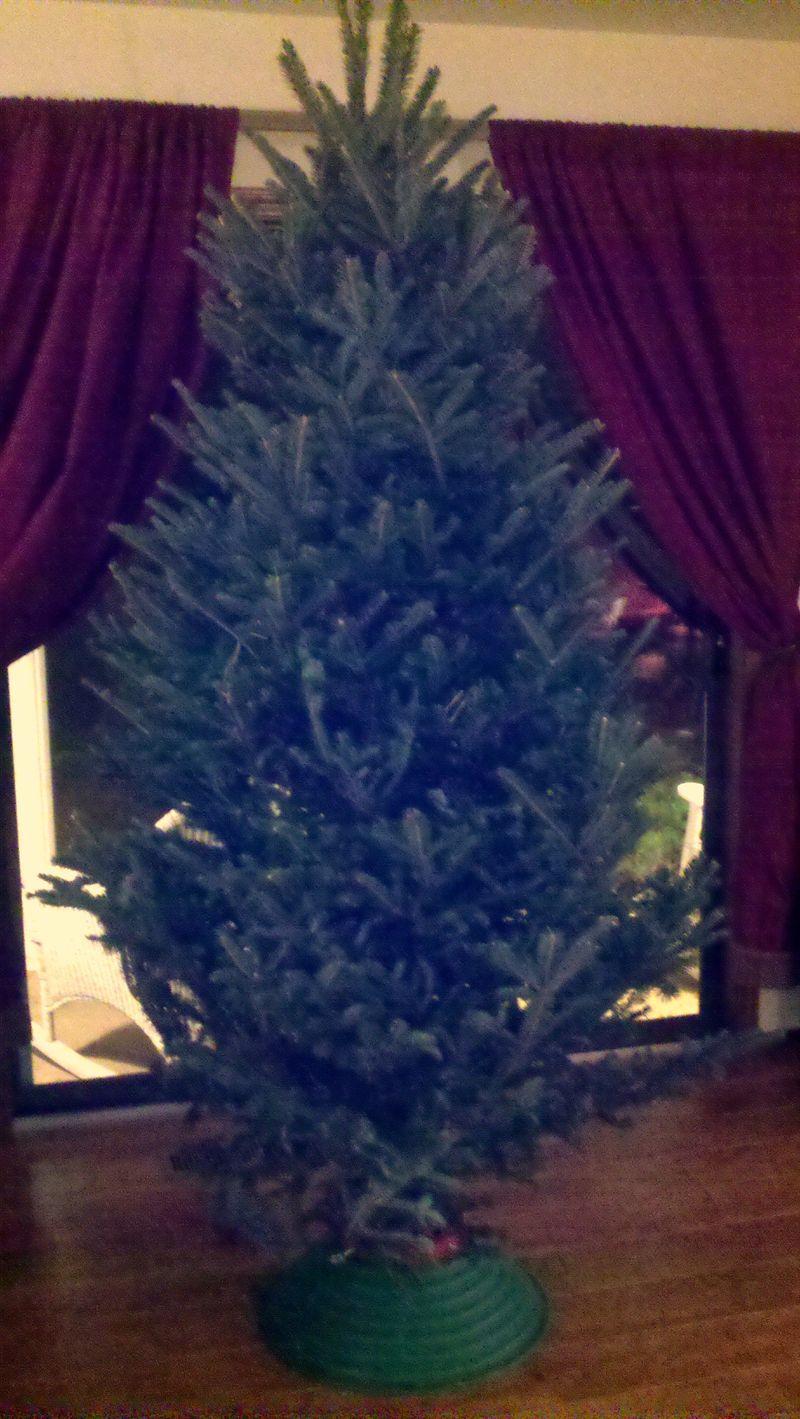 Christmas tree before pic