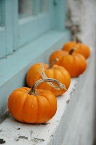 Stock xchng 676457_the_pumpkin_parade
