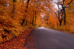 Stock xchng 1319712_forest_road_-_hdr