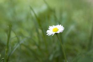Stock xchng 1088654_flower1