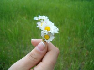 Stock xchng 305952_hand_holding_daisies