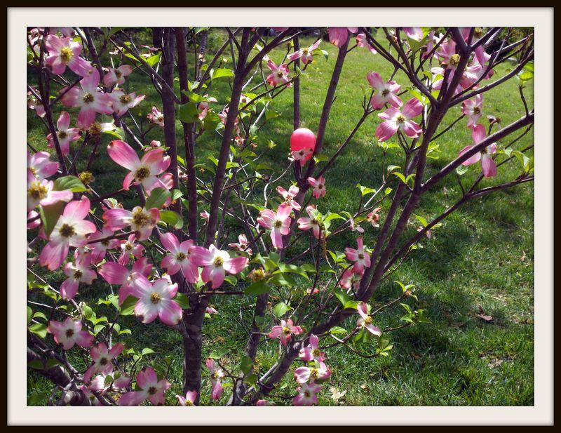 Easter egg in Dogwood tree 2012
