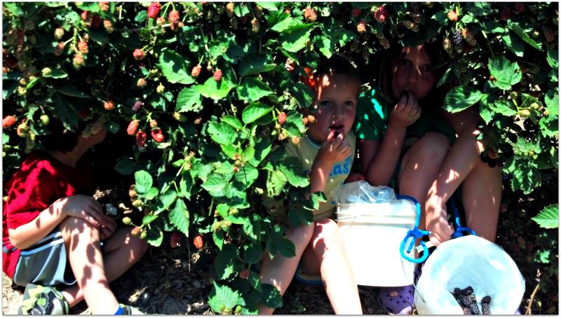 Hiding in shade and eating berries