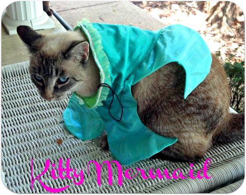 Cat fashion show the little mermaid2