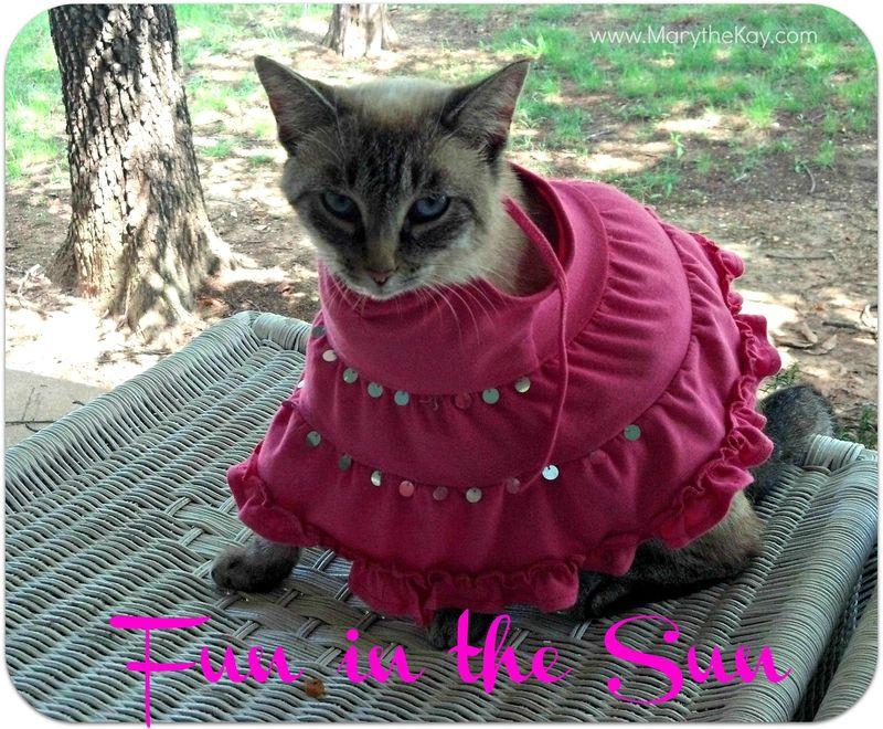 Cat fashion show fun in the sun2