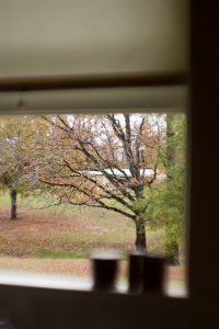Stock xchng credit 1372516_fall_tree_through_a_window