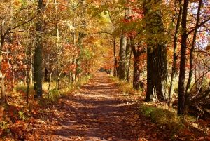 Stock xchng credit 1320950_forest_in_autumn_-_road