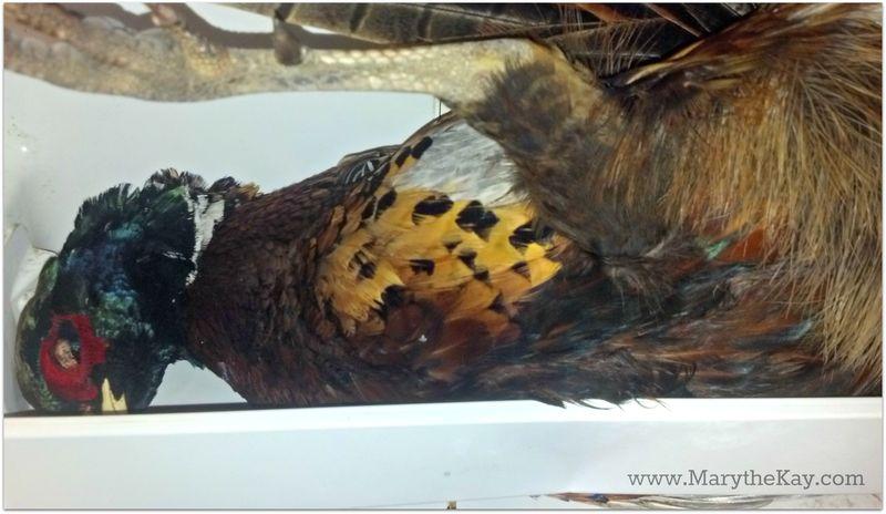 Frozen pheasant up close